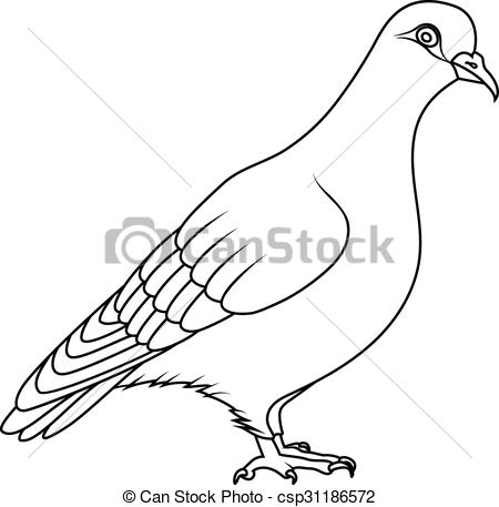 Vectors Illustration of Coloring book: pigeon csp31186572.