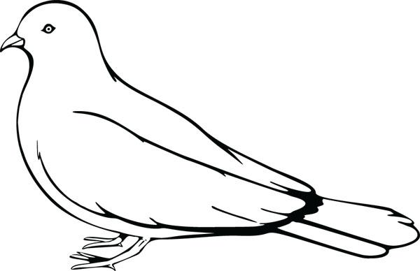 Bird pigeon clipart - Clipground
