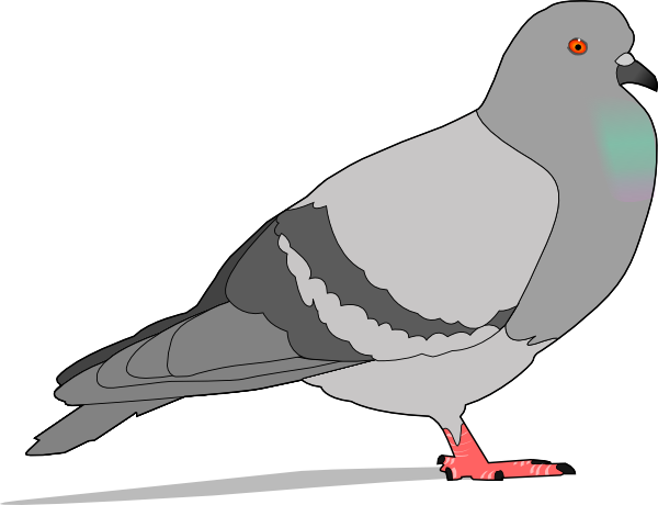 Free to Use & Public Domain Pigeon Clip Art.