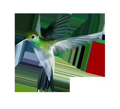 Bird Download Free PNG.