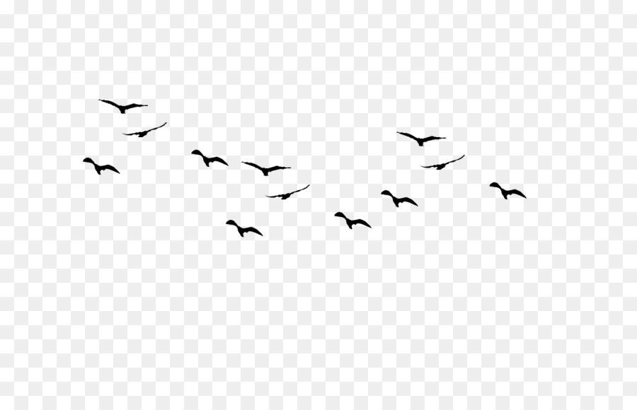 Bird Wing png download.
