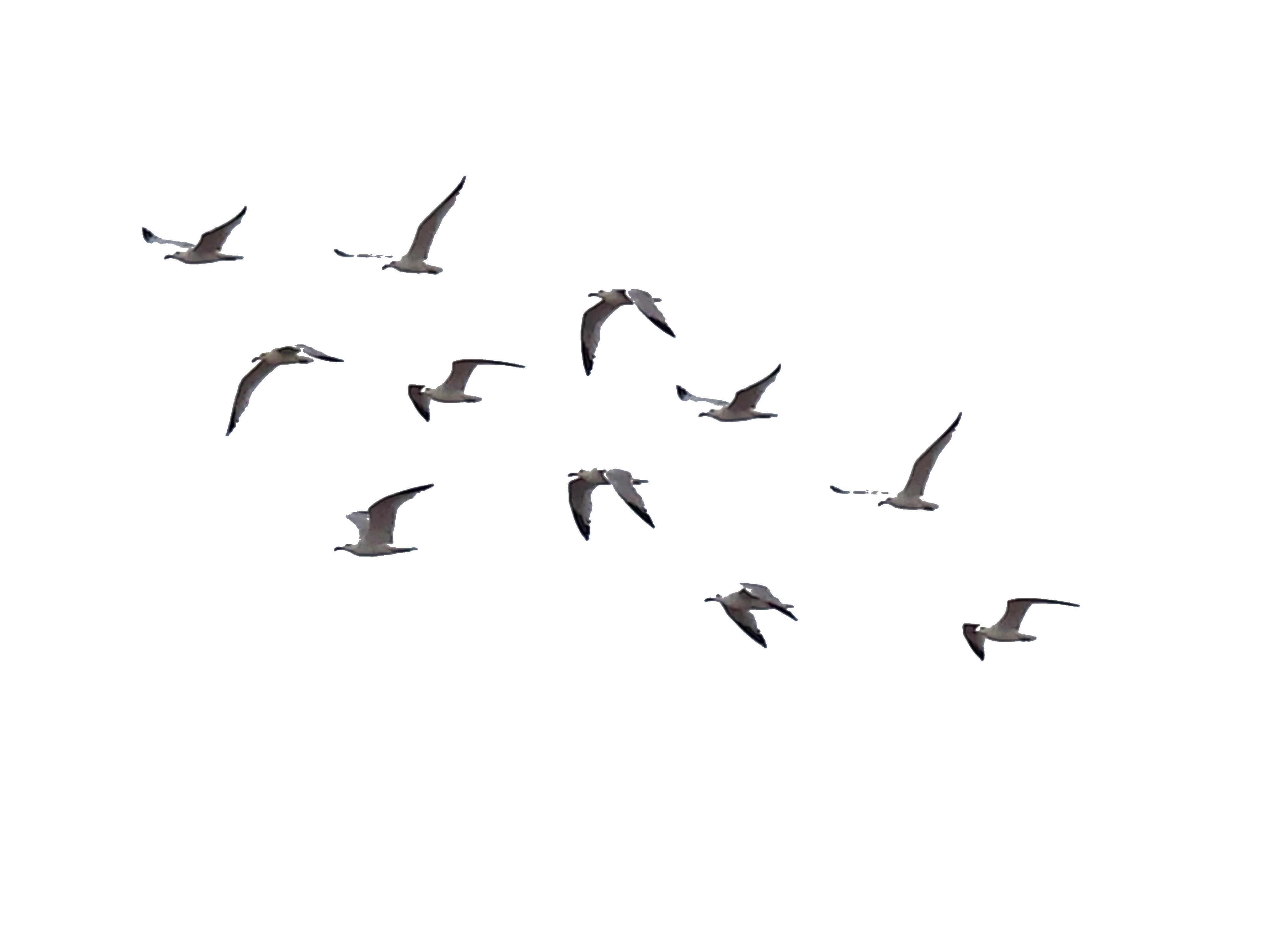Download Bird PNG File.