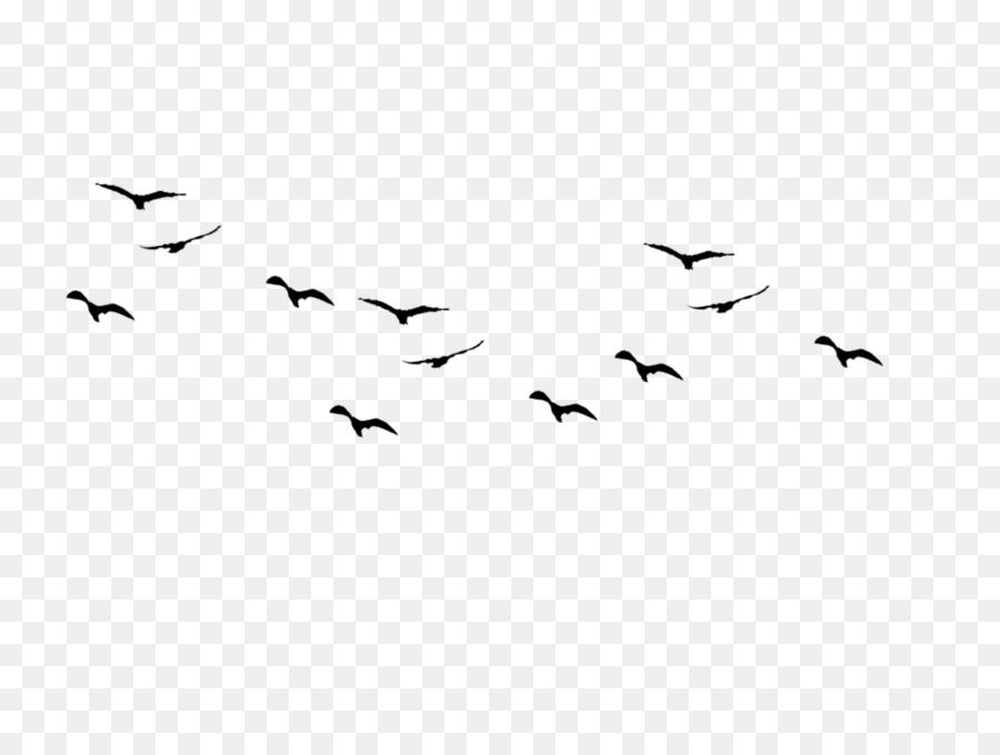 Bird Flight Bird Flight Flock Bird Migra #34755.