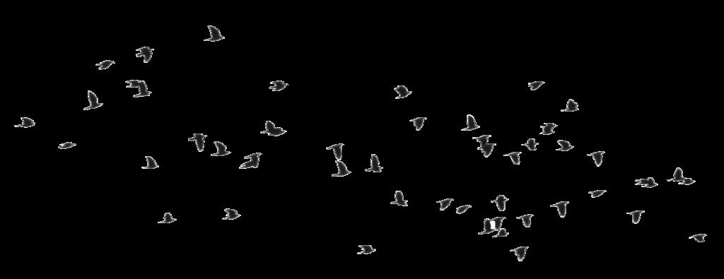 Bird PNG Transparent Images.