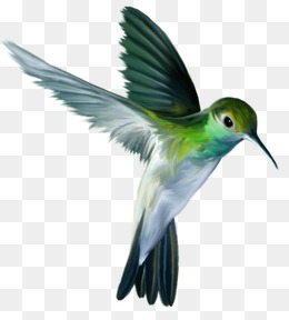 Flying Bird, Birds, Green, Fly PNG Image #23457.