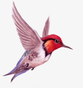 Flying Bird, Bird Clipart, Red Bird, Fly PNG Image and Clipart for.
