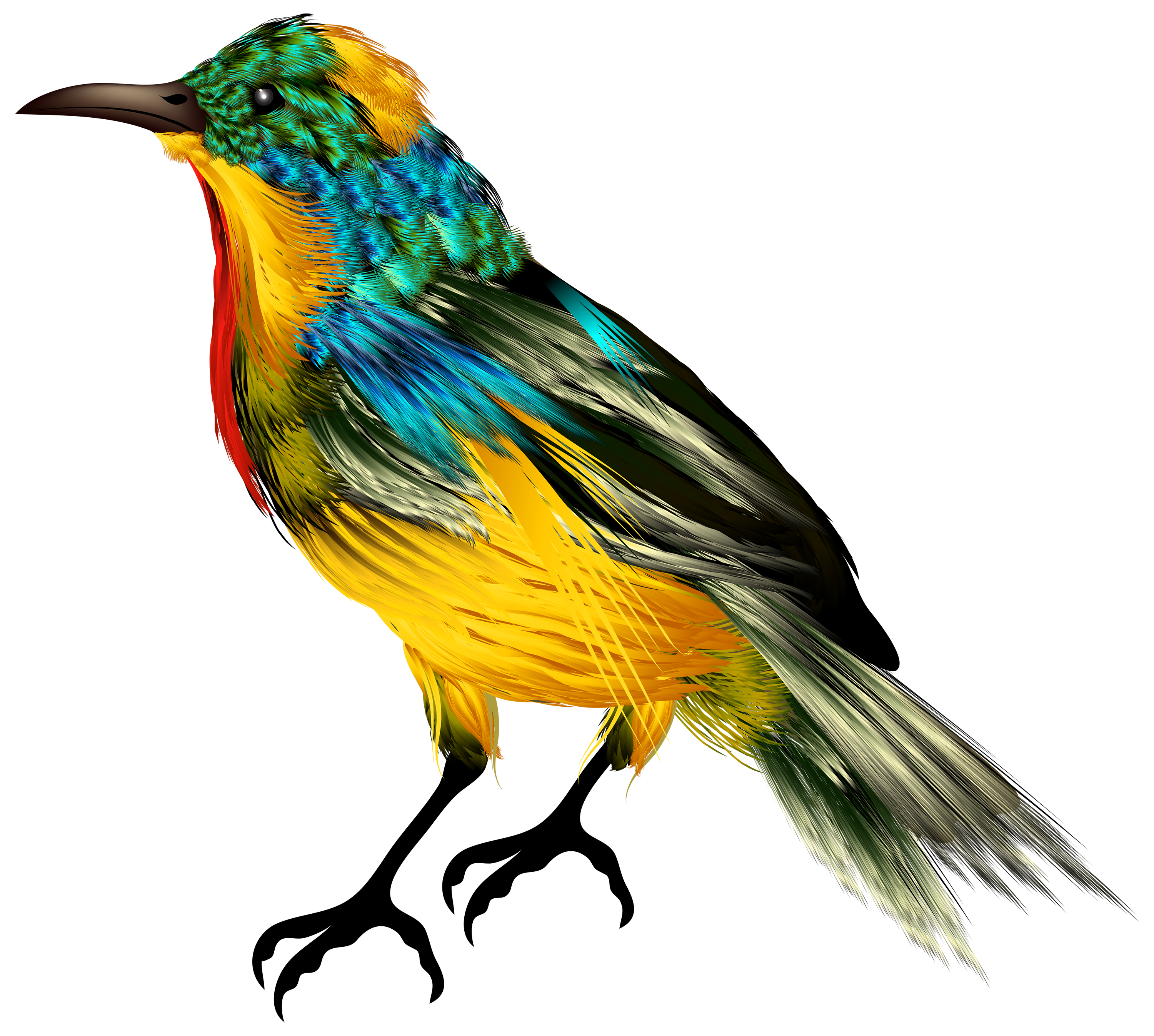 Colourful Bird PNG Clipart.