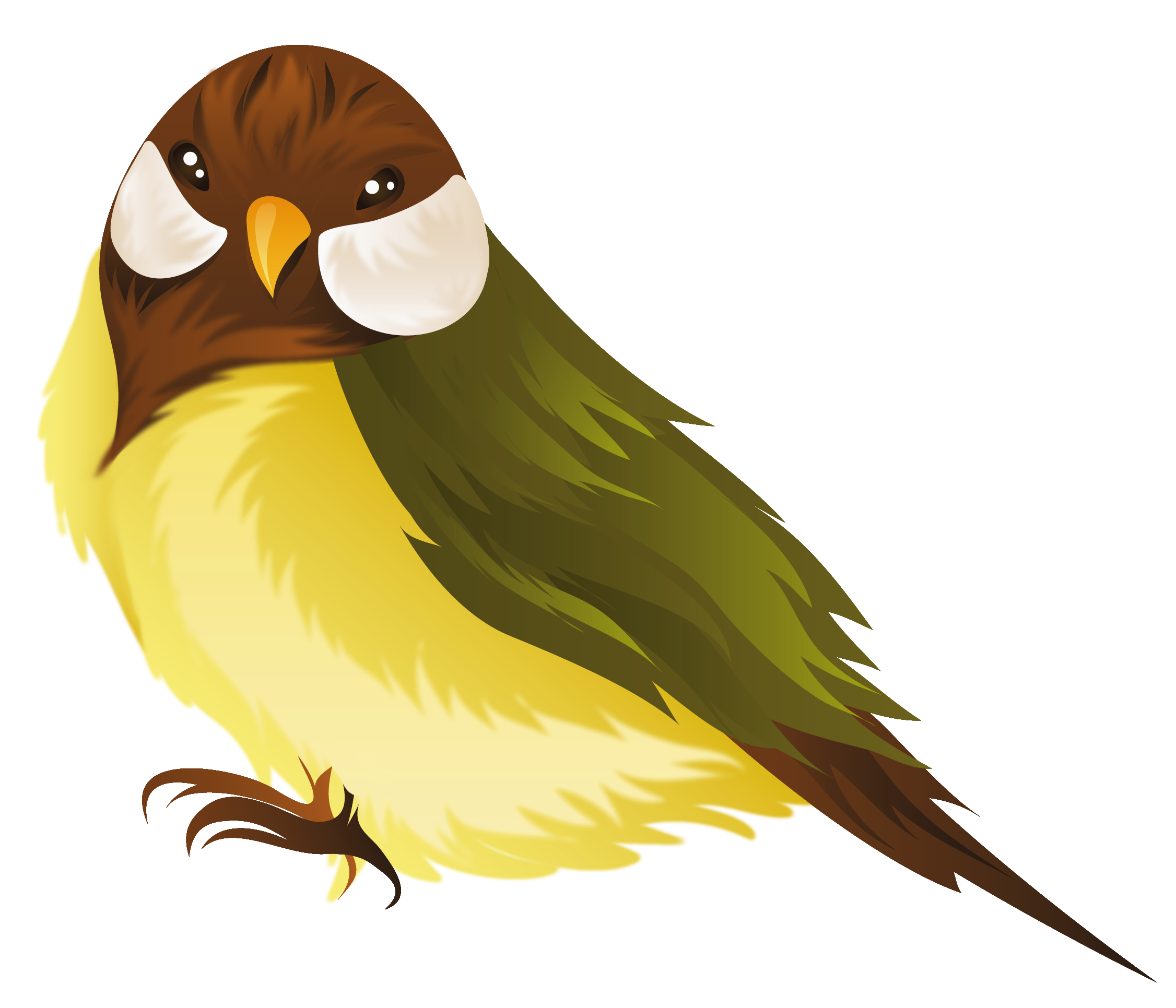 Bird PNG Clipart Image.