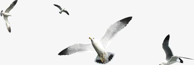 Flying Birds PNG, Clipart, Birds, Birds Clipart, Fly, Flying Clipart.