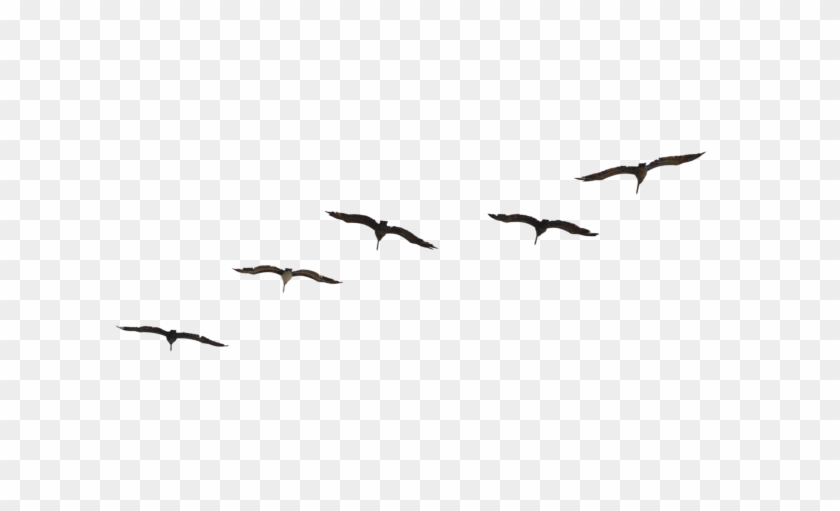 Fly Bird Png.