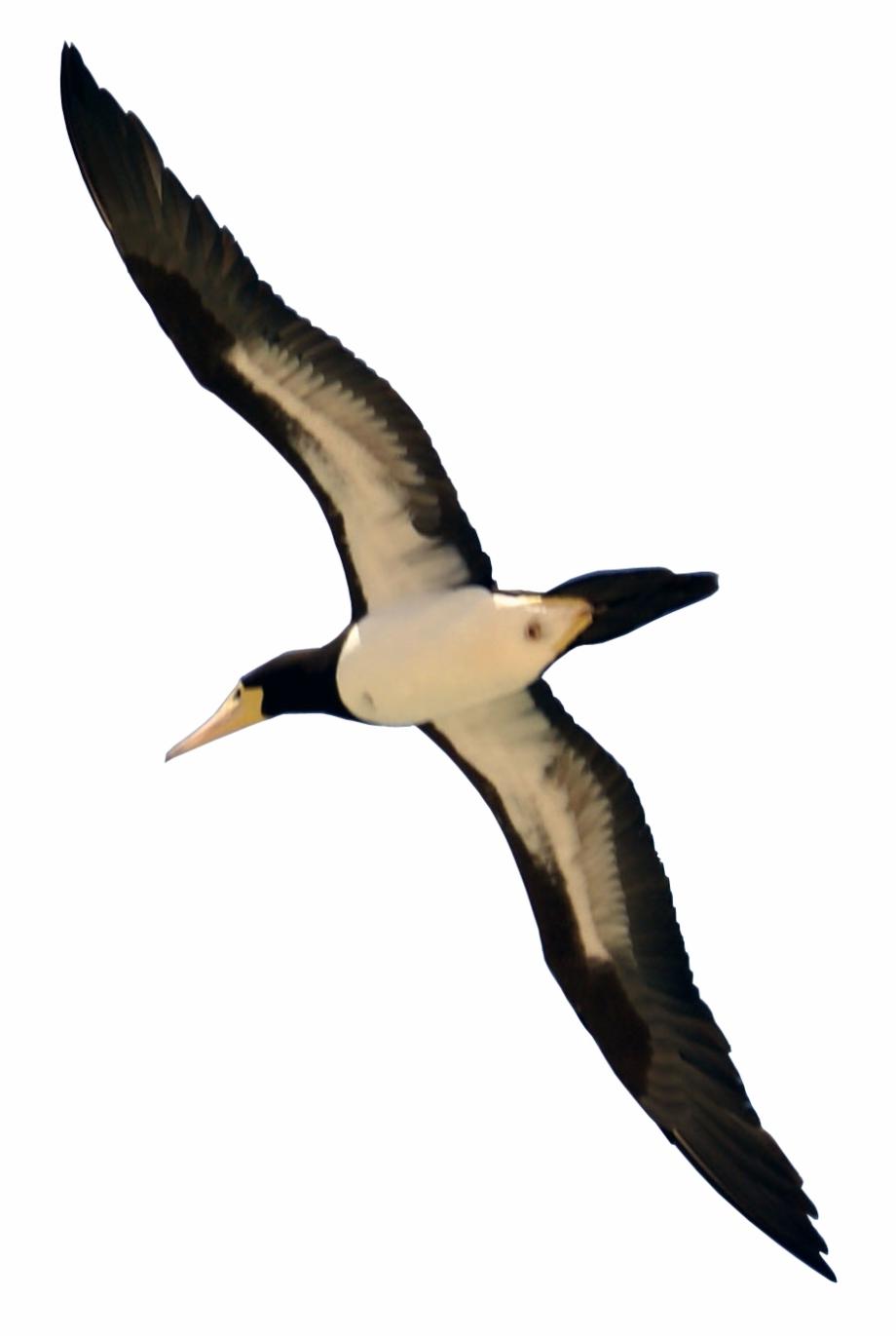 Bird Flying.