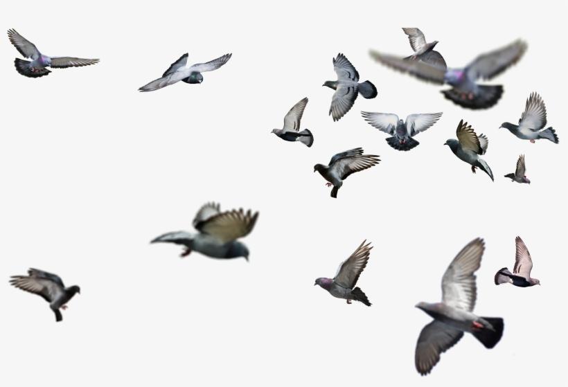 Flying Bird Png.