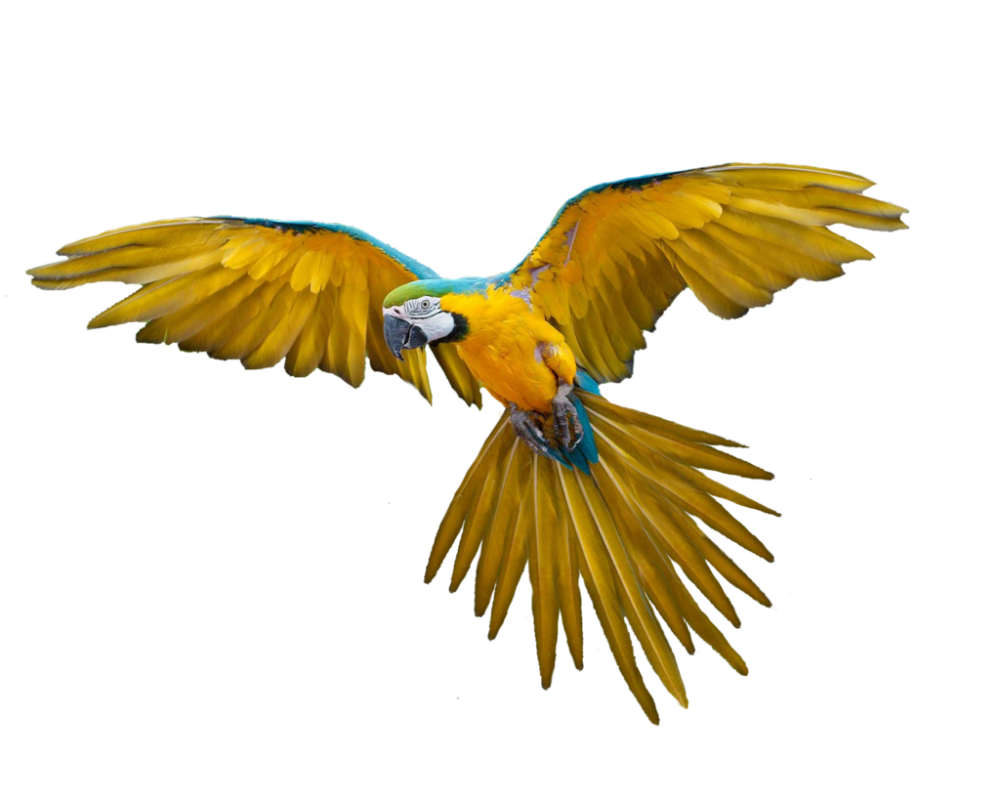 Download Flying Bird PNG Pic For Designing Use.