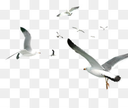 Flying Bird Png (101+ images in Collection) Page 3.