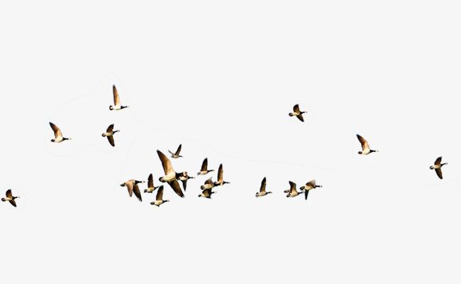 Flying Birds, Birds, Flight, Travel PNG Transparent Image and.