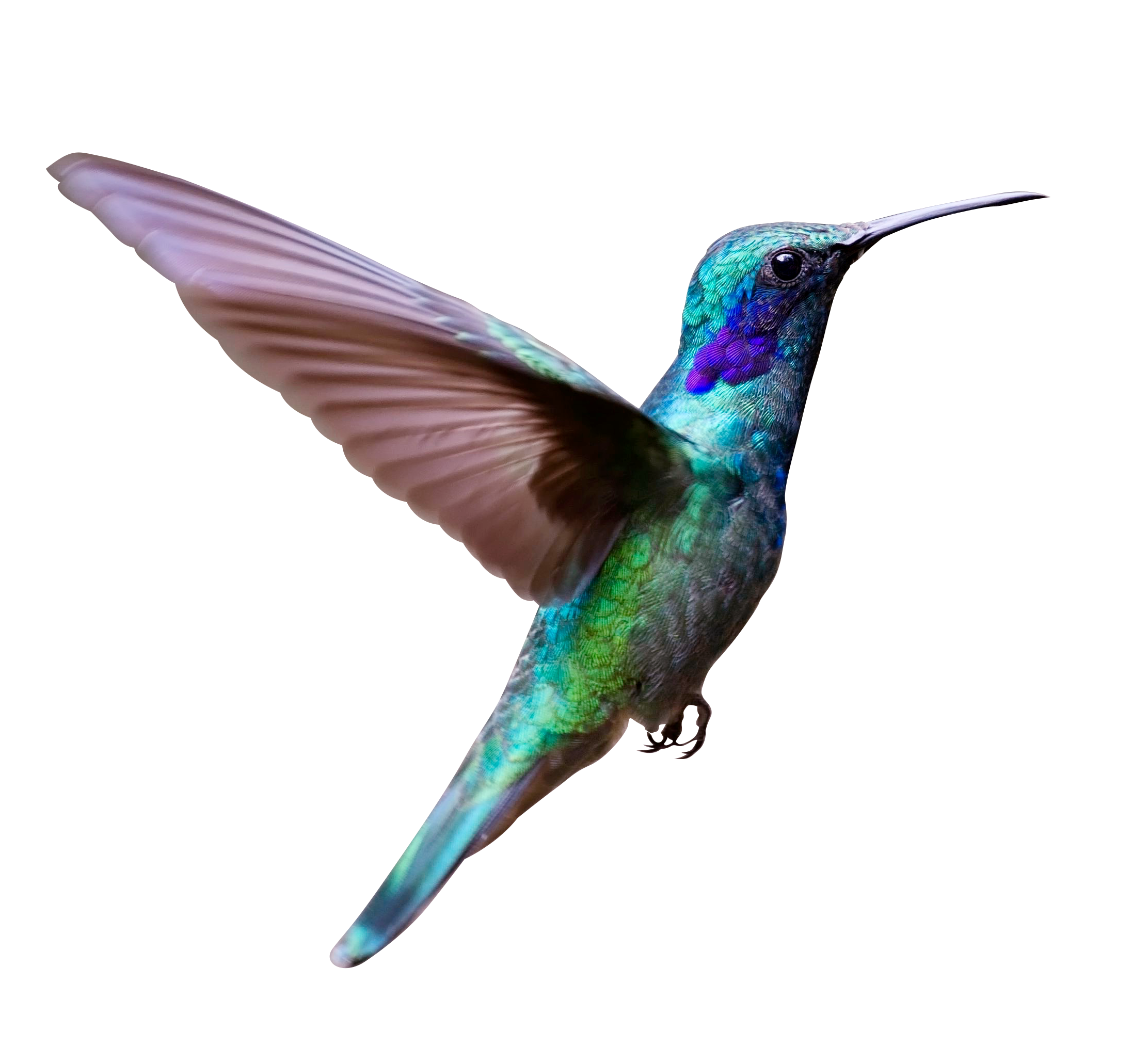 Flying Bird PNG Image Free Download searchpng.com.