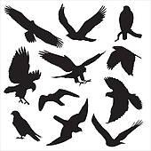 Bird prey Clipart EPS Images. 1,612 bird prey clip art vector.