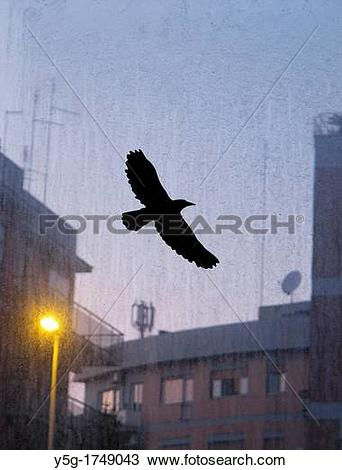 Stock Photo of bird protection glass panel by highway in city town.