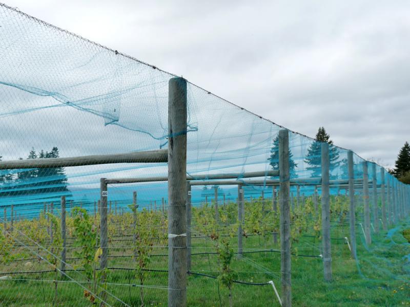 Overhead Crop Netting.
