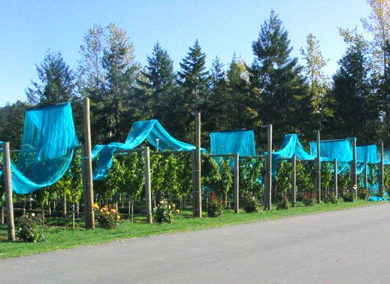 1000+ images about Fruit Tree Netting on Pinterest.