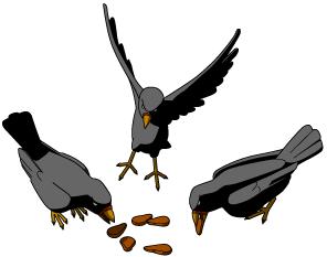 Bird eating clipart.