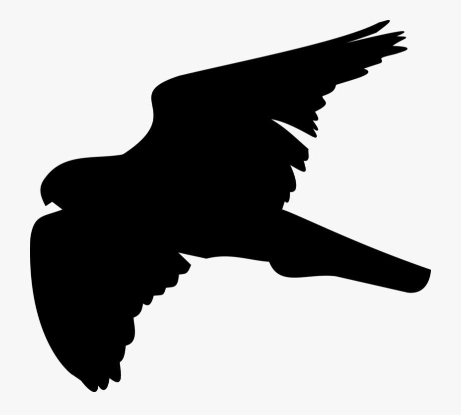 Hawk Clip Art.