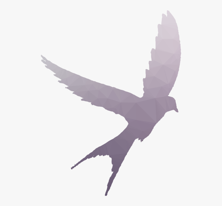 Bird Shadow Clipart Swallow Bird Flight.