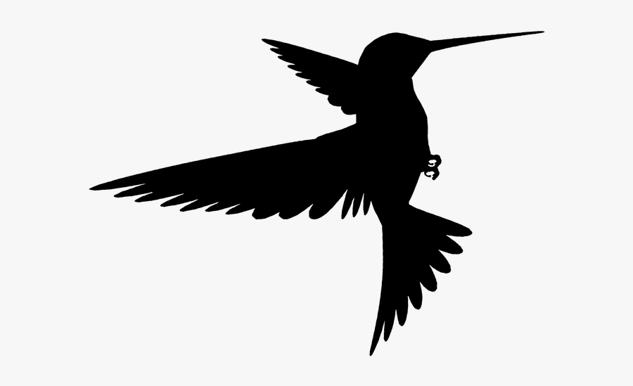 Shadow Sombra Silhueta Silueta Bird Pássaro Beijaflor.
