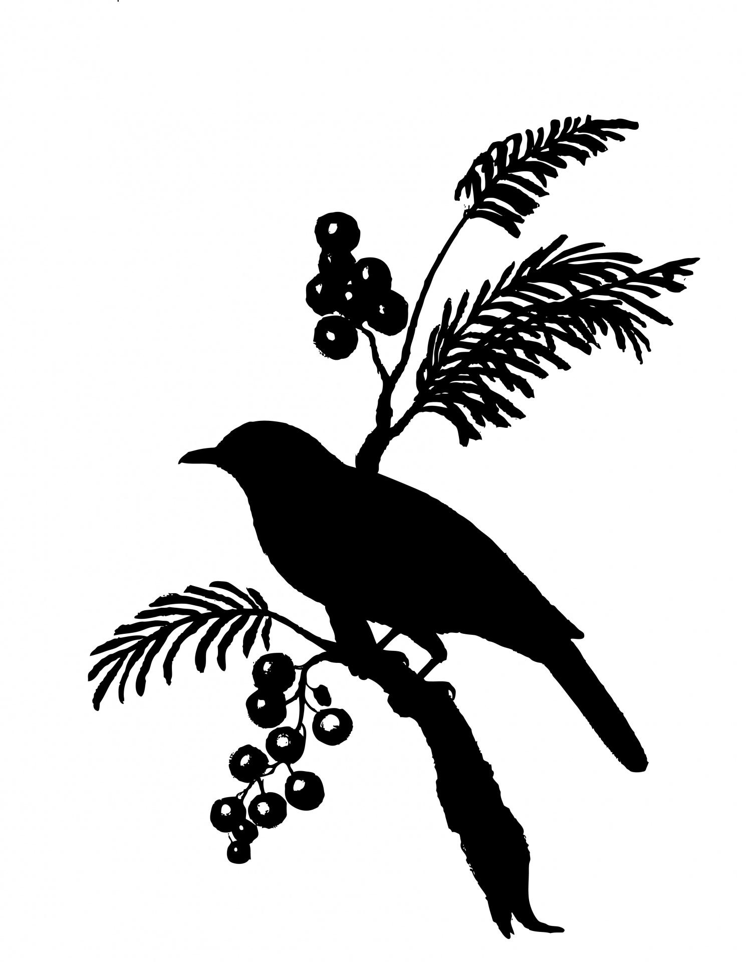 Bird,silhouette,clipart,clip art,black.