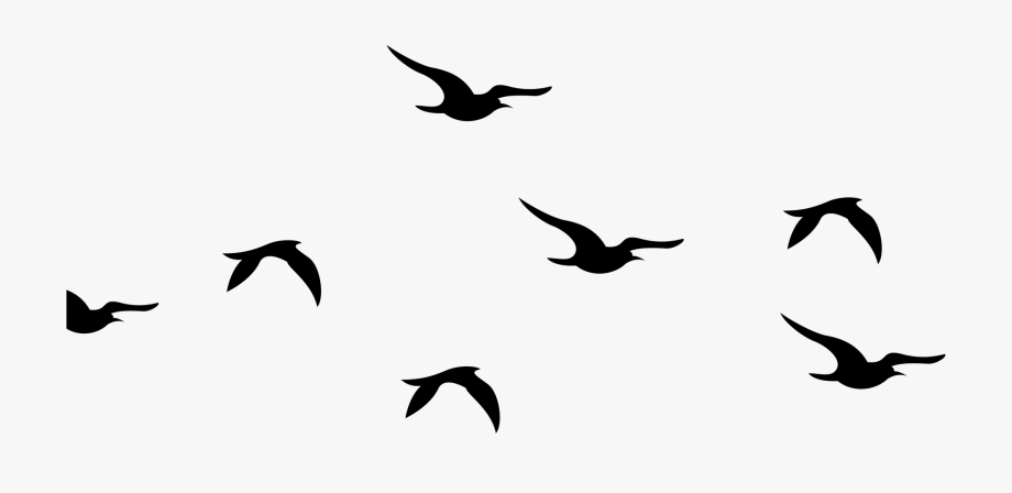 Bird Flock Png.