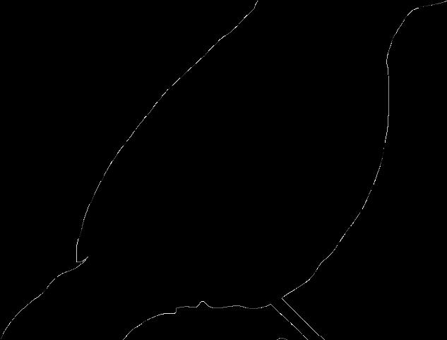 Silhouette Clipart Parrot.