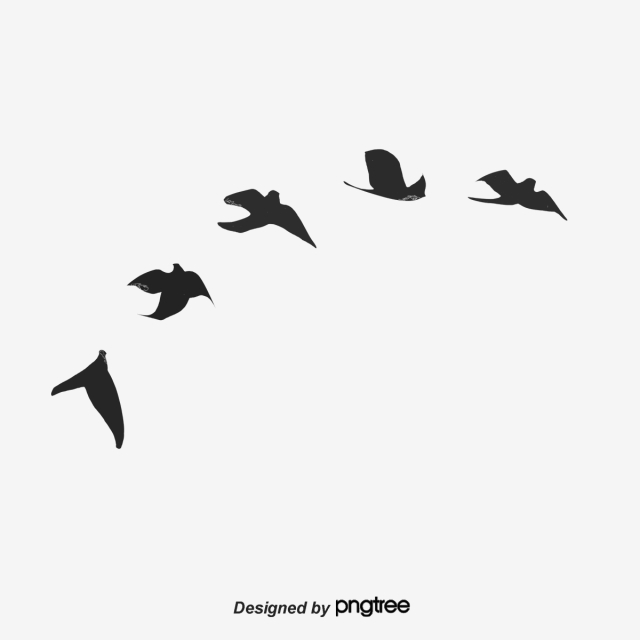 Bird Silhouette PNG Images.