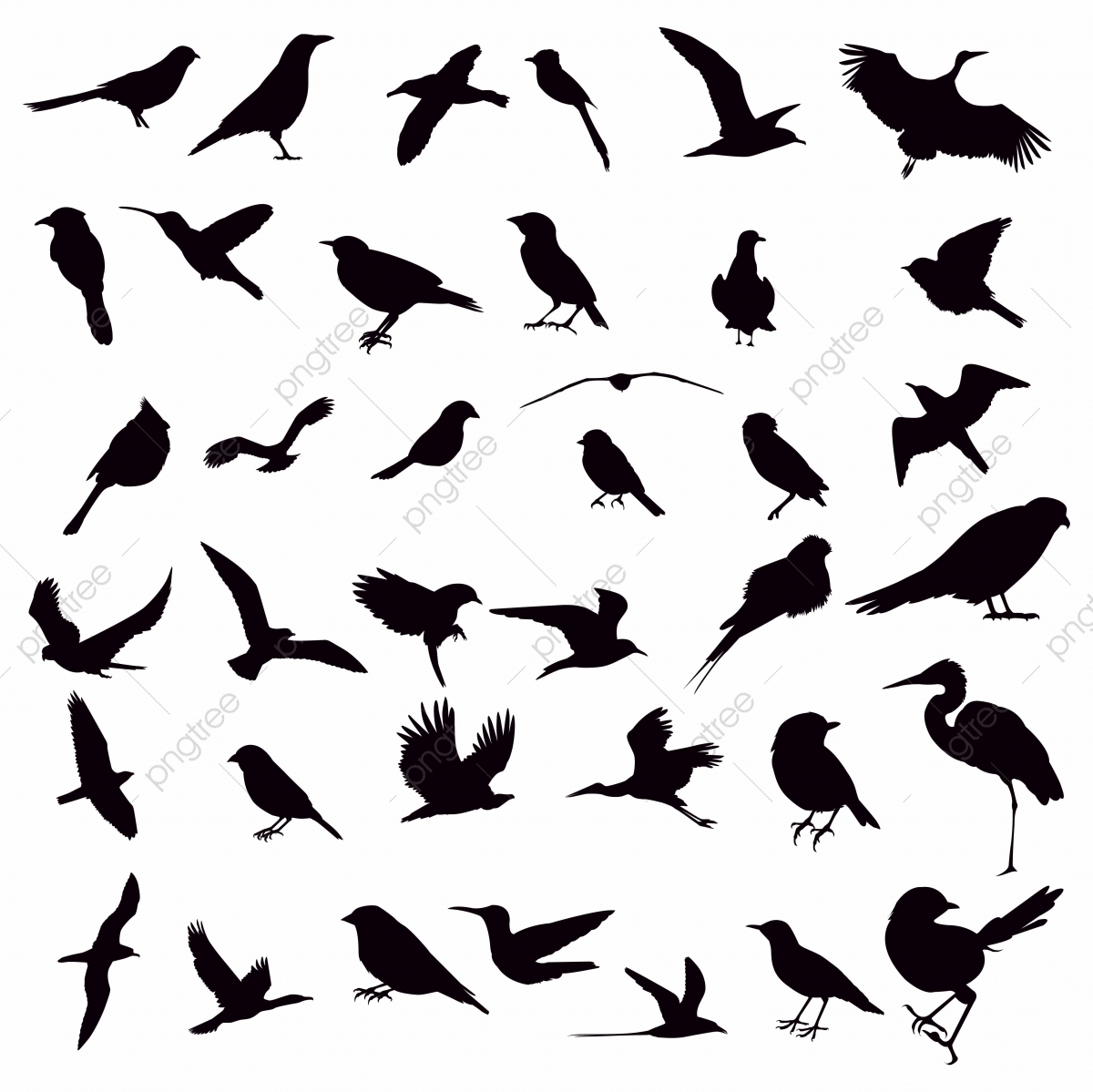 Vector Collection Of Bird Silhouettes, Collection, Bird, Animal PNG.