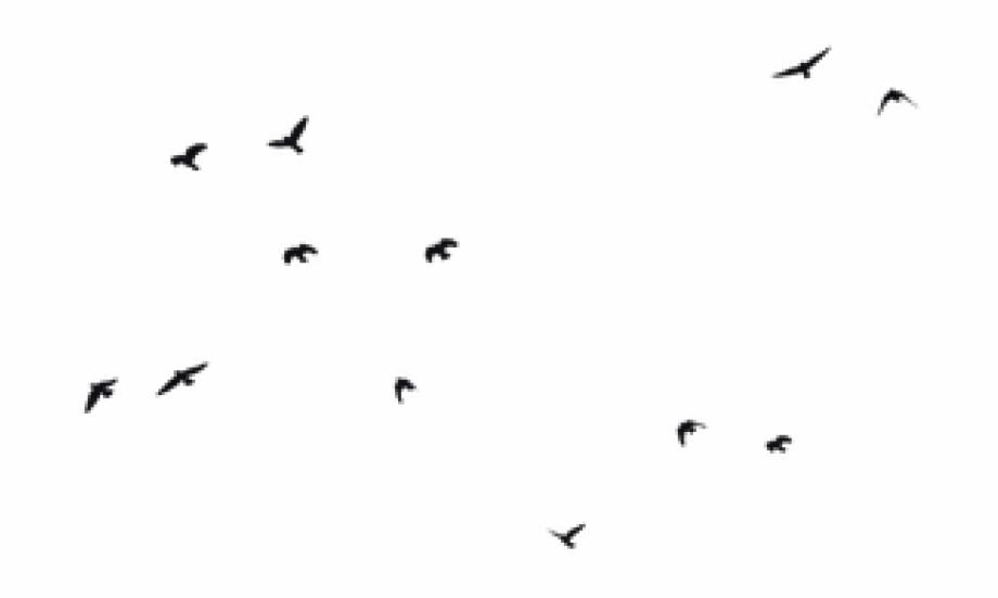 Birds Png.