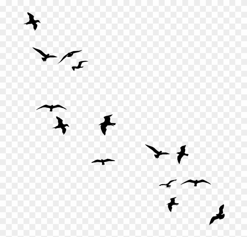 Flying Bird Silhouette Png.