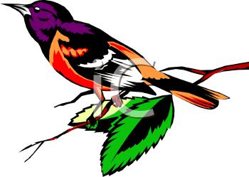 Bird On A Branch Clipart.