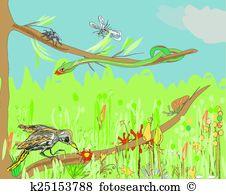 Bird eating spider Clip Art Illustrations. 5 bird eating spider.