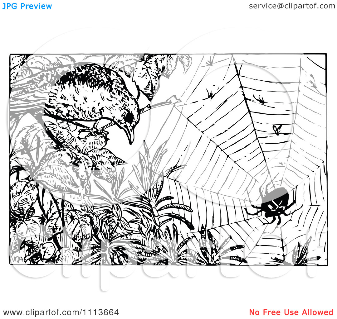 Clipart Vintage Black And White Bird And Web With A Spider.