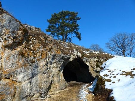Cave, Animals.