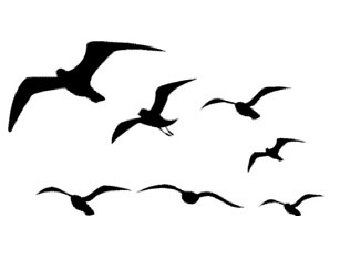 Sea birds clipart - Clipground
