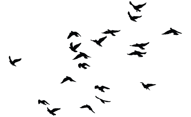 Bird Flock Silhouette.