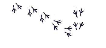 Cute Mini Bird tracks rubber stamp by terbearco on Etsy.