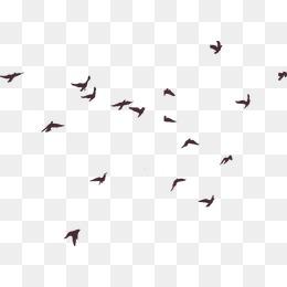 Bird Vector, Free Download Birds, Love birds, Watercolor bird Vector.