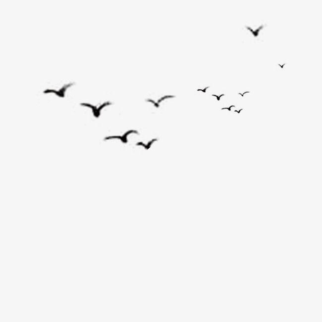 Bird, Black, Bird Vector PNG Transparent Clipart Image and PSD File.
