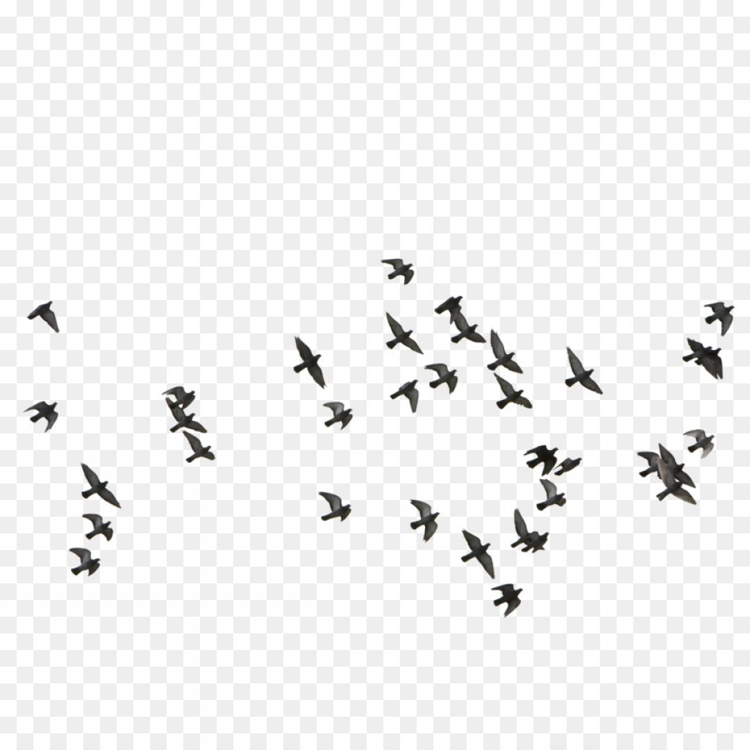 Png Bird Euclidean Vector Feige Flocks Of Birds Flying.