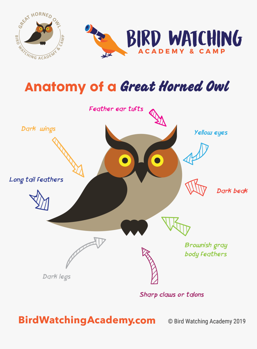 Bird Anatomy For Kids, HD Png Download.