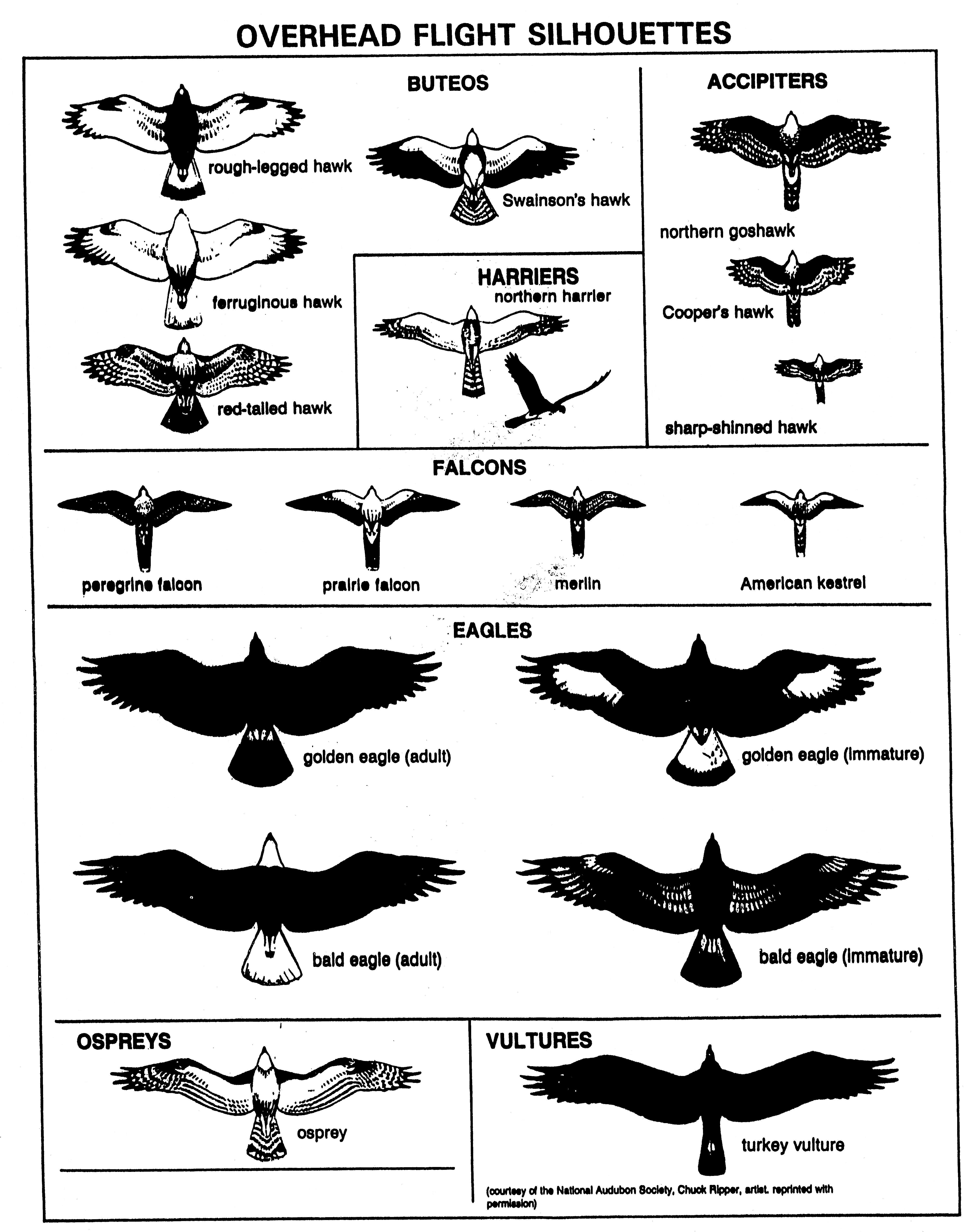 Flying Bird Silhouette Identification.