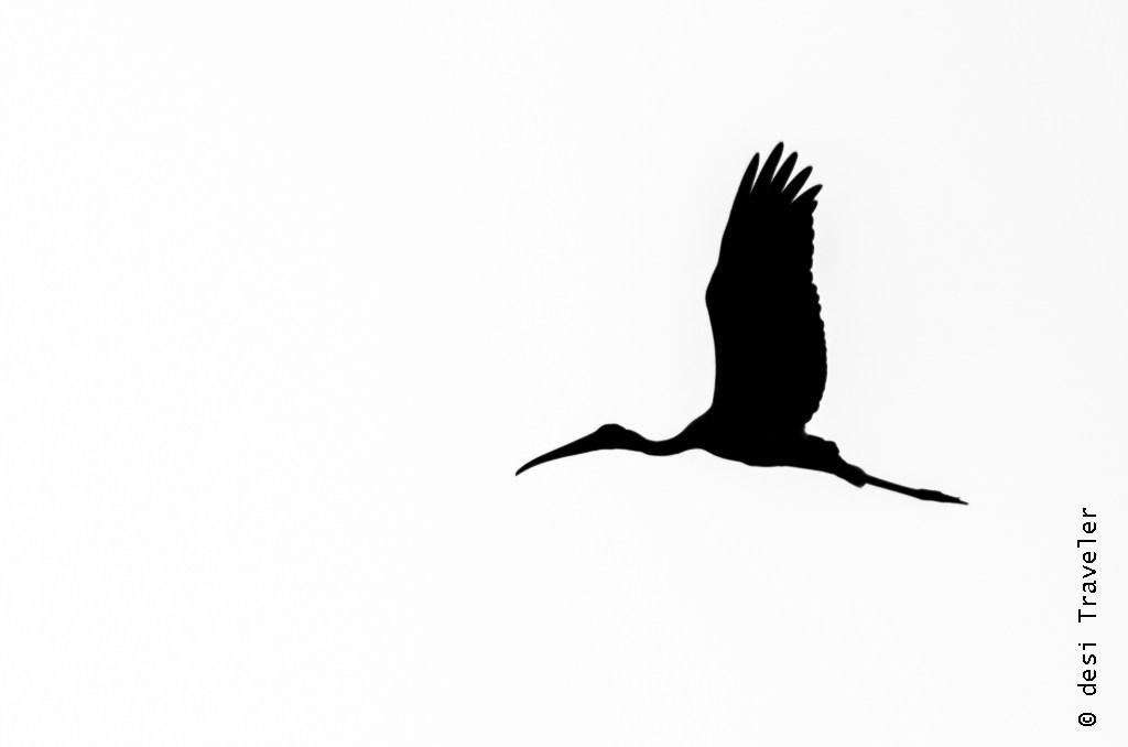 Bird Watching Silhouette.