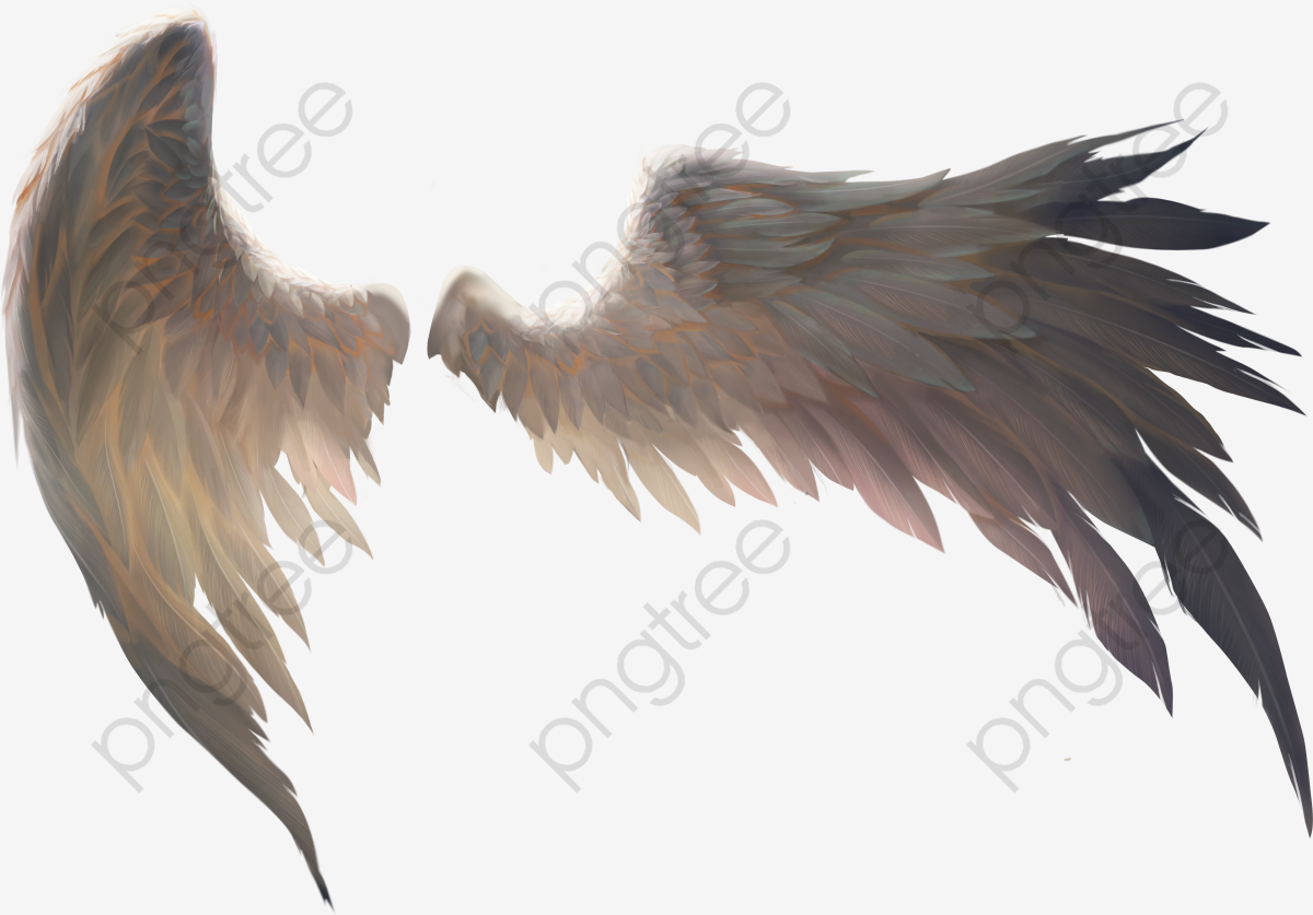 A Pair Of Birds Wings, Wings Clipart, Wing, Feather PNG Transparent.