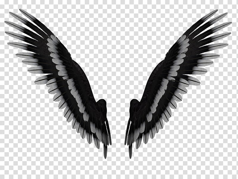 Feathered Wings A , wide.